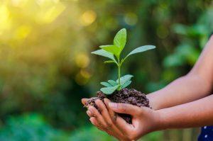 nature dans la main